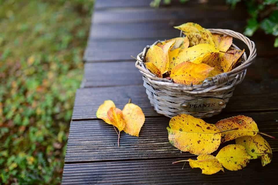 Есента изобилства от градински занимания - прибиране на реколтата, почистване на градината и др.