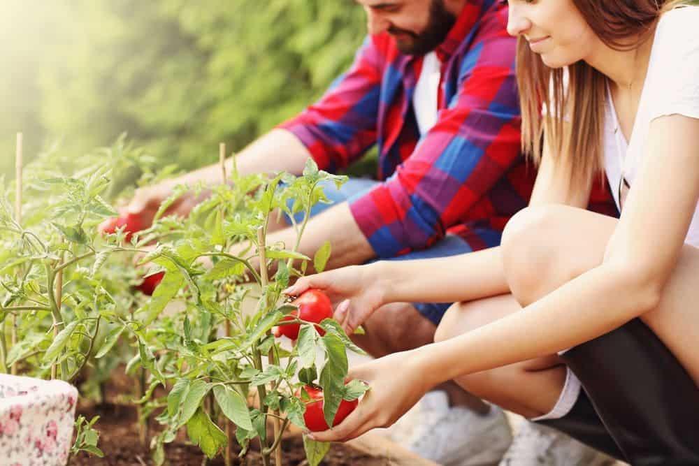 През летните месеци се налага често да почиствате двора и градината си