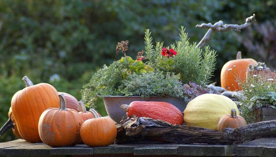 Прибирането на реколтата е не по-малко важно от всяка друга дейност. Есента е времето когато събираме отгледаните продукти.
