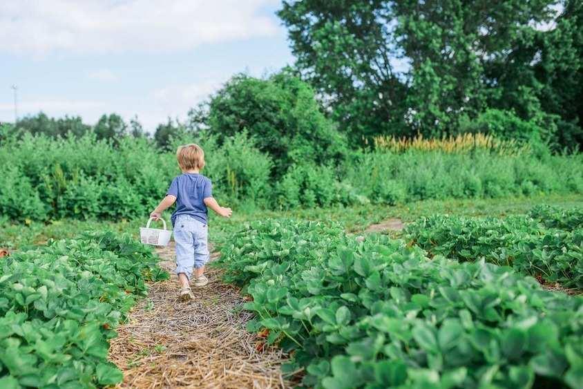 Зеленчуковата градина изобилства от продукция през лятото.