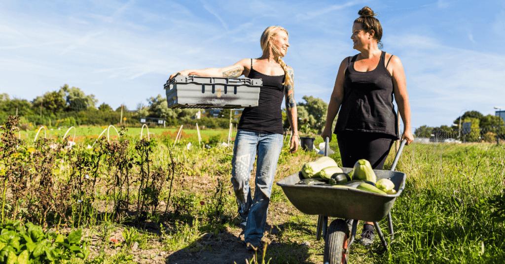 Две жени в зеленчукова градина с ръчна количка